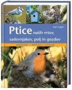https://www.ciciklub.si/ptice.nasih.vrtov.ai.19441.200.200.1..jpg